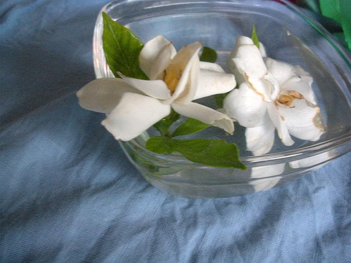 gardenias in water