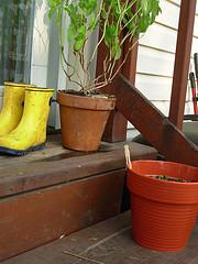 muddy rainboots