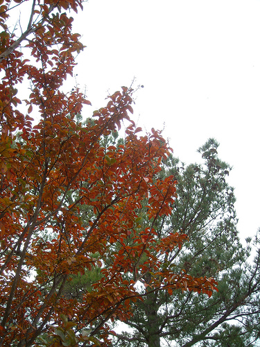 fall color - orange