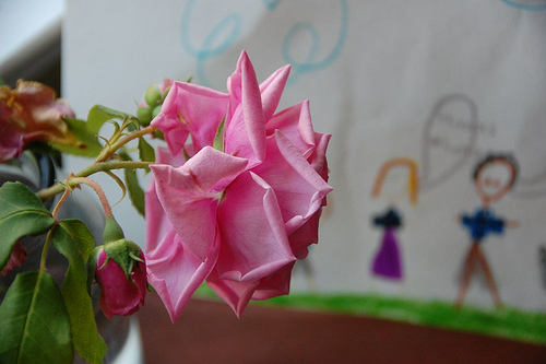 Flower from our garden and a drawing