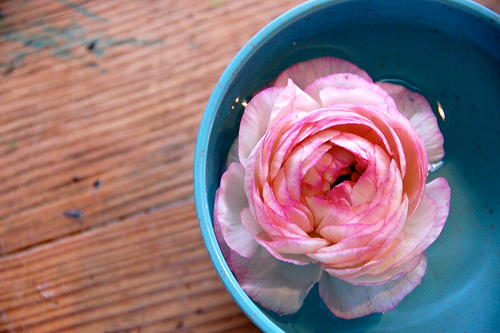 floating ranunculus