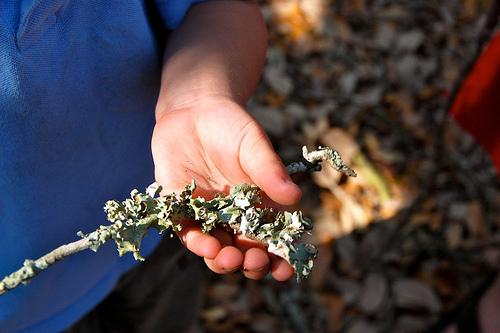 camp: lichen discovery