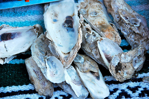 camping: oyster shells