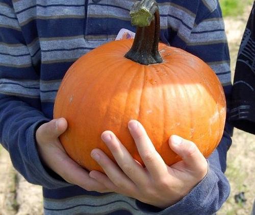 pumpkin picked