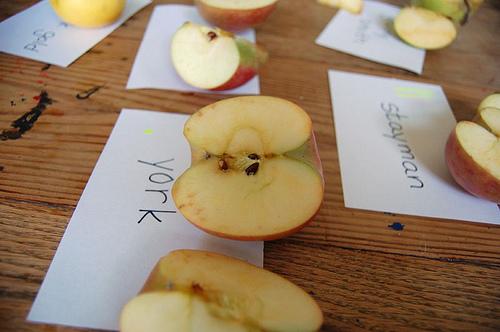taste testing apples